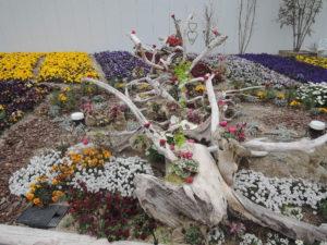 流木と花壇